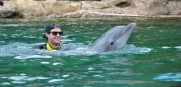 Wil swimming with a dolphin