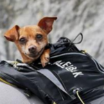 Puppy Gets Ride of a Lifetime in Tour de France